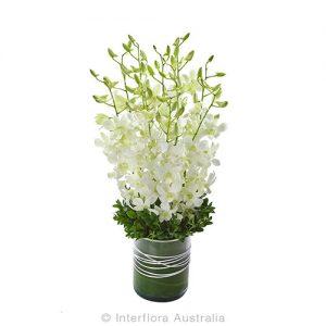 Elegant white orchid presentation