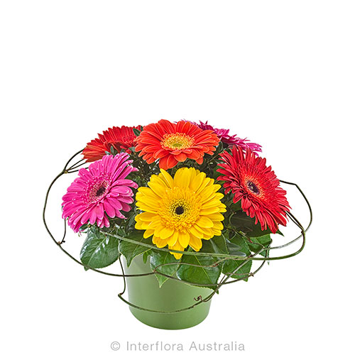 Beautiful gerbera arrangement in a ceramic pot