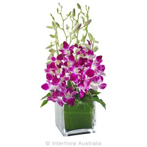 Elegant orchids in a square glass cube