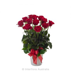 12 beautiful roses in a ceramic cylinda vase