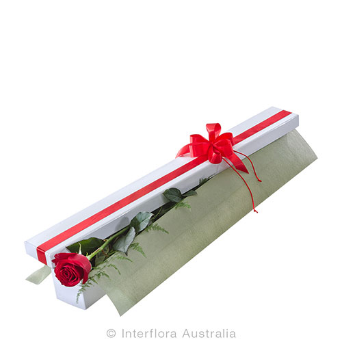 A simple rose in a beautifully presented box